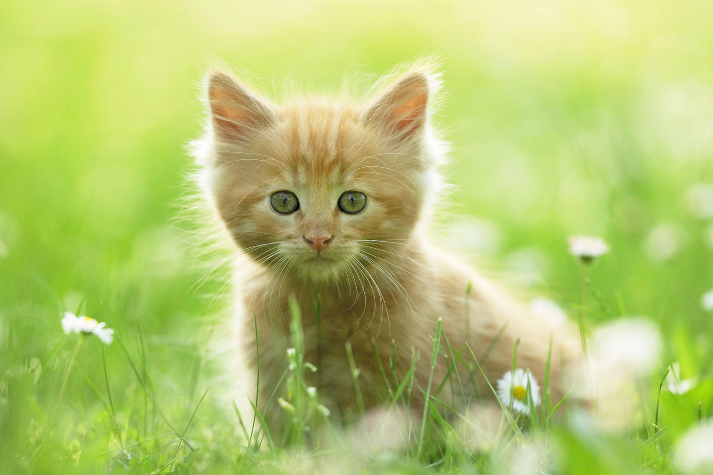 про котят картинки