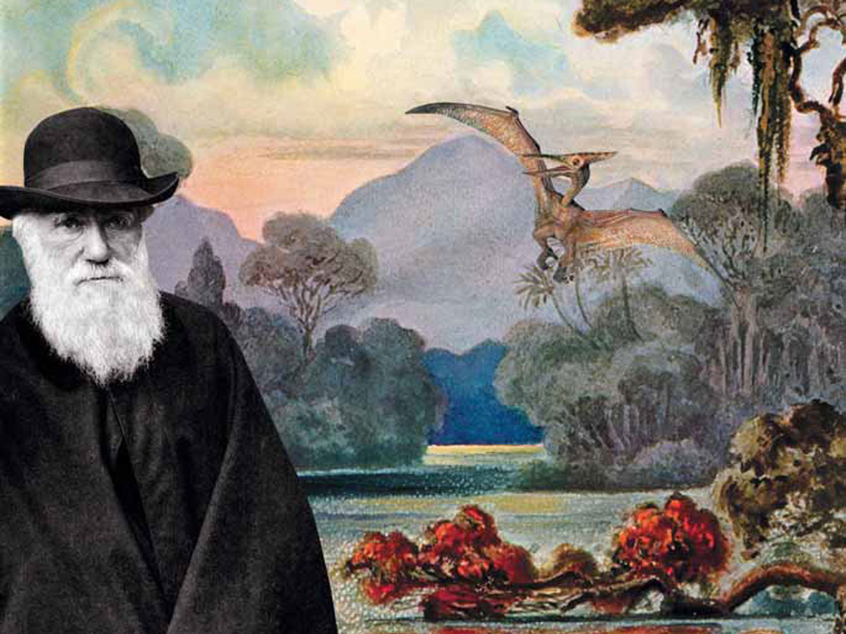 Факты эволюции видов в природе картинки