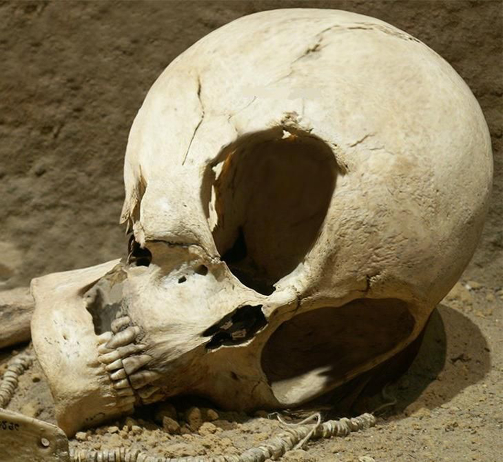 В дании рабочие обнаружили череп инопланетянина * новости * .