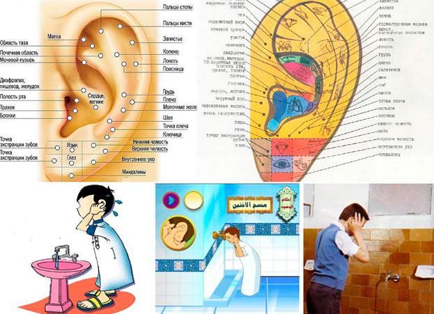 Биологически Активные Точки Ушей